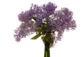Bunch of lilac is in bottle — Stock Photo