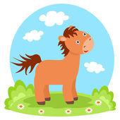 Lovely colt on glade — 图库照片