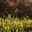 Fresh Green Grasses — Stock Photo