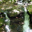 Stock Photo: Creek in Mezibori, Czech Republic (2013-05-19)