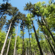Stock Photo: Forest in Mezibori, Czech Republic