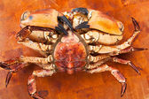 Fresh raw edible brown sea crab face down. Close Up. — Stock Photo