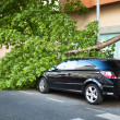 Broken tree over a car — Stock fotografie