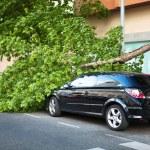 Broken tree over a car — Stock fotografie
