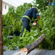 Fire fighters cutting fallen tree — Stock Photo