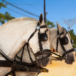 Horses of a carriage in Seville, Spain. — Stock Photo #40802373