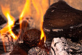 Burning Wood and Cones — Stock Photo