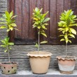 Tree pots — Stock Photo #37616113