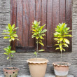 Tree pots — Stock Photo #37616515