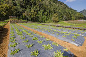 Organic Garden — Stock Photo