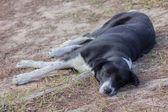 Old sleep dog — Стоковое фото