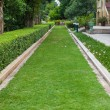 Green grass Pathway in a Lush Green Park — Stock Photo