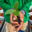 Cucumber seedling on hand farmer — Stock Photo #34364331