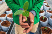 Cucumber seedling on hand farmer — Stock Photo