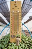 Thermometer in greenhouse seedling. — Foto Stock
