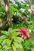Colorful orchid flower in the garden — Foto de Stock