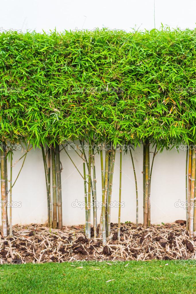Planta de bamb y verde hierba fondo de pared en jard n for Hierba jardin