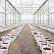 Preparation coco peat in greenhouse  for cultivation vegetable — Stock Photo #47480569