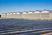 View for greenhouse with blue sky and field agriculture — Stock Photo