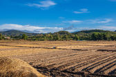 Soil on field agriculture in thailand country — Foto Stock