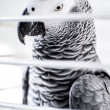 Parrot in the birdcage — Stock Photo