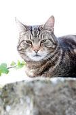 Cat on the wall — Stok fotoğraf