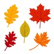 Colorful set of autumn leaves, isolated vector illustration — Stock Vector