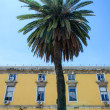 Palm tree at old street of Lisbon — Stock Photo #36166659