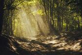 魔法の森の小道。木 々の間から太陽光線 — ストック写真