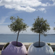 Stock Photo: Trees in plastic flowerbeds on embankment