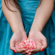 Female hands holding rose petals — Stock Photo