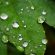 Leaf with rain droplets. Selective focus — Stock Photo