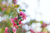 Spring blossoms, selective focus — Stock Photo