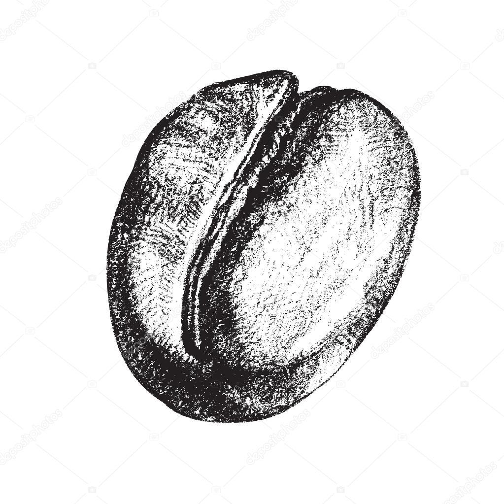 Coffee Bean Drawing Vintage Coffee Bean — Vector