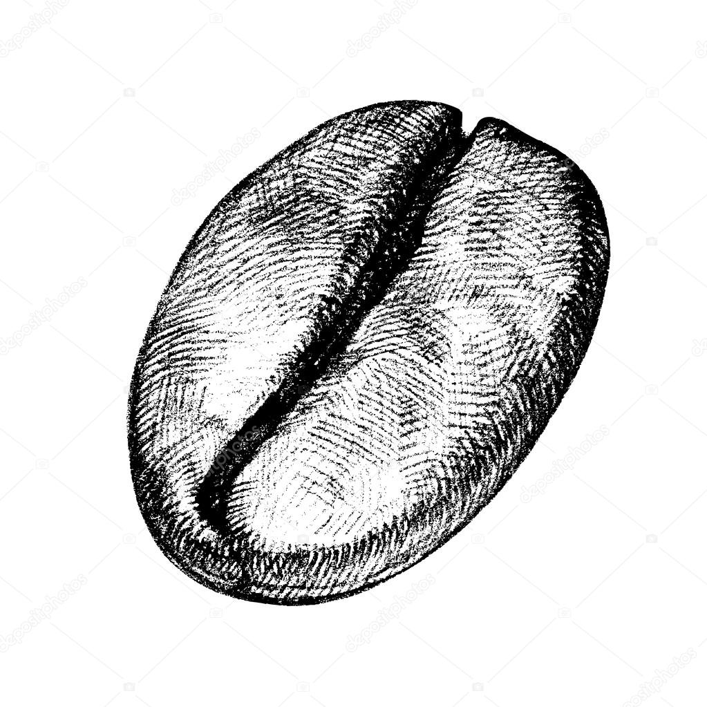 Coffee Bean Drawing Vector Draw of a Coffee Bean