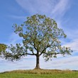 Tree — Stock Photo #34564929