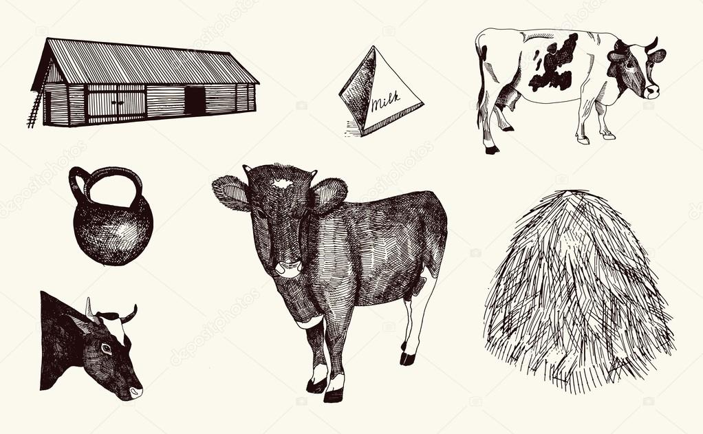 Cow Milk Products Cow And Milk Products on