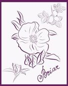 Briar. Wild rose. Hand drawn illustration — Wektor stockowy