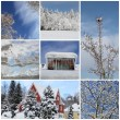 Winter collage with snow, forest — Stock Photo
