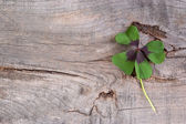 Happiness with shamrock — Stockfoto