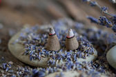 Aromatherapy with lavender — Stock Photo