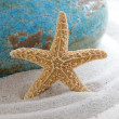 Starfish in sand — Stock Photo