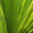 Palm leaf for background — Stock Photo