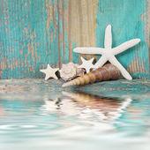 Stelle marine e conchiglie per vacanza — Foto Stock