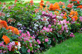 Colorful flower design in garden — Foto Stock