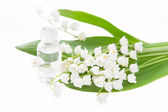 Lily of the valley essence — Foto Stock