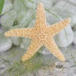 Stock Photo: Close-up of starfish - maritime spdecoration