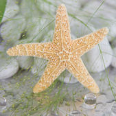 Close-up of a starfish - maritime spa decoration — Stock Photo