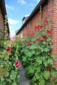 House of red brick stones with red farmers roses in the front. — Stock Photo