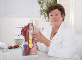 Senior female doctor explaining the human body with torso. — Stock Photo